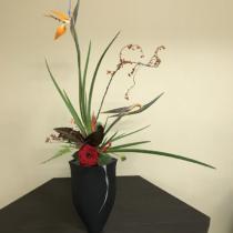 極楽鳥花と薔薇